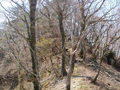 尾根を下っていったところのピークが見える谷。ここから赤井谷へ下ることにした