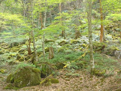 苔の原生地帯。まさに神秘の場所だった