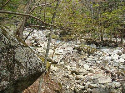 少し沢を登っていくと登山道にでて橋があった