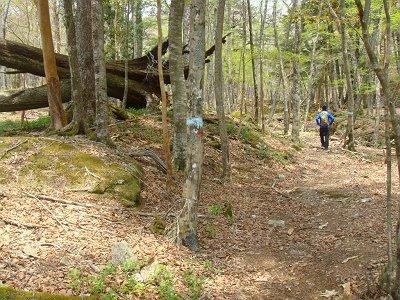 ここからは印もあり、踏み跡もありで歩きやすかった。木の青い印をたどれば深仙ノ宿へいける