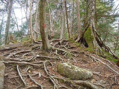この付近からいよいよ深仙ノ宿への登りがはじまる
