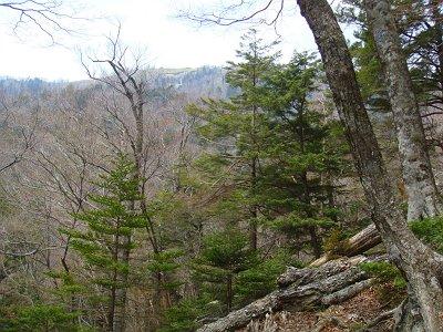 左手に古田の森のピークが見えた