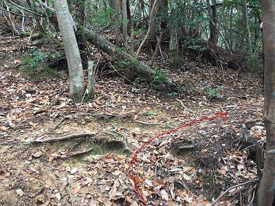 ここまでくると急登は終わる。テープに従って右へ行くと登山道に出る