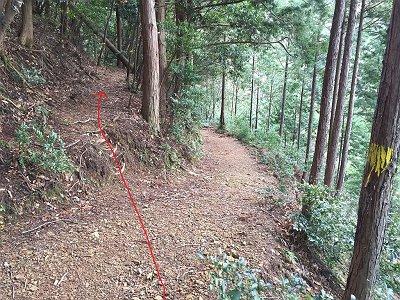 ここで登山道に出会うが廃線跡ルートは直進する