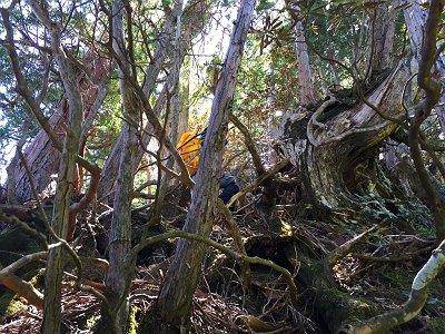 このピークは木だらけで歩きにくかった