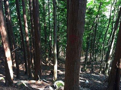 やっと植林地になってきた