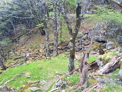 国見岳から下りきると苔地帯といいテント場になりそうな稚子泊。ここから七曜岳への登りになるのでちょい休憩