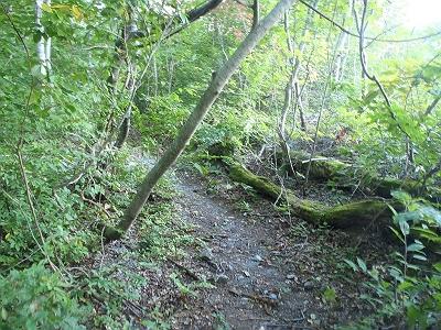 ときには巻きルート登山道あり