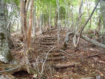 尾根道はバリルートでありながら階段とかある