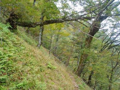 行者還岳のピークを踏むため大峯奥駈道を七曜岳のほうへ向かう