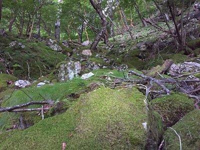 早速の苔地帯