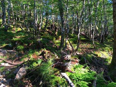 朝の苔地帯は美しい