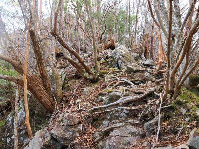 尾根道はとても普通の登山道というより無理矢理に尾根を登ってる感じの道だった。結構急登で息が切れる