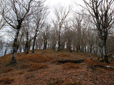 登りきるとピークが見えた。偽ピークっぽくないのでおそらくこの先が池木屋山なはず
