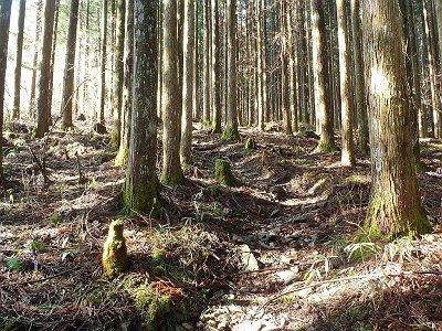 植林地帯が続く