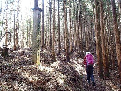 ここの尾根伝いは白倉山方面へ直登