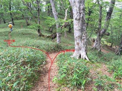 稲村小屋の手前のここで左へ行くとクロモジ尾に入る