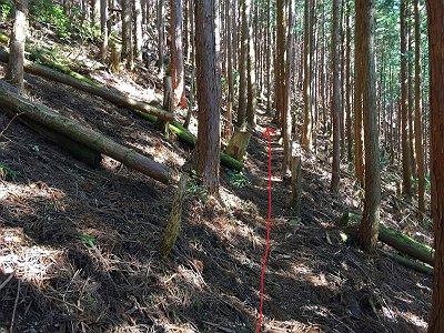 標高1000mあたりからはっきりした踏み跡がでてくる。尾根を斜めにトラバースしているので、ちょっと不安になるが谷にさしかかるところで折れるので大丈夫