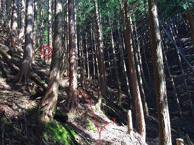 谷に差しかかるが、ここで左に折れて尾根を登る。向こう側には黄色のペンキ印の木があるが、谷を渡らないこと。