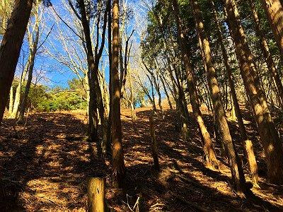 植林と自然林のとあと少し。この先右にも道ぽいのがあるが、とにかく尾根を登る