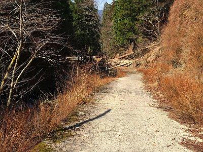 この道で一番嫌な林道開始。心折れそうなので、ここからも小走りで進む