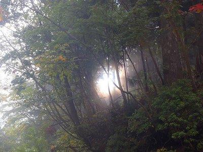 樹林の間から光がさすのが不思議な光景