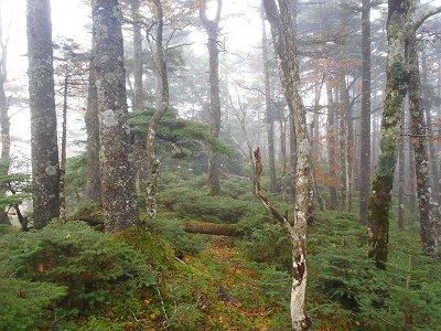 ここからは苔の原生林の稜線歩きになる