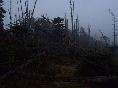 弥山手前は大倒木地帯といわれ、だだっ広く樹林が倒れている。弥山はすぐそこなのに迷いやすい。冬吹雪かれたら確実に迷うだろう
