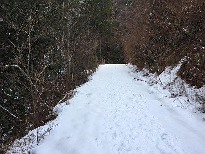 林道を10分ほど歩くともう積雪