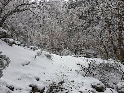 この付近から樹氷がすごいことになってきた