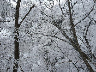 すごい樹氷だが青空がでてくれない