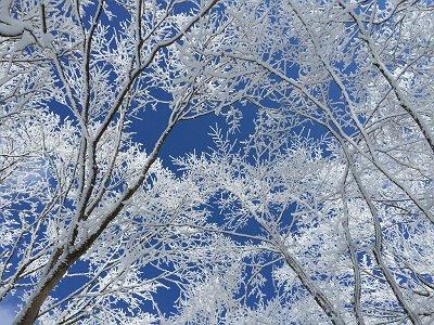 青空が広がっているので樹氷地帯も撮影する