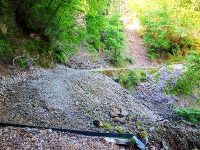 長い林道が続く。これいつまで続くんだろう