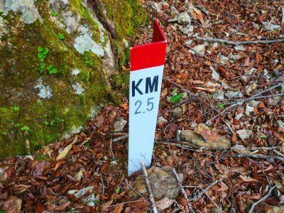 ゲートから林道を2.5KMきたということになるのか!?