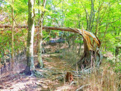 これは最近折れた木っぽい。台風でやられたのかな!?