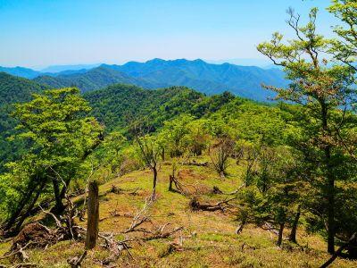 これから戻る稜線と山々と大峰らしい道を撮影。倒木が多いのは大峰の醍醐味かな