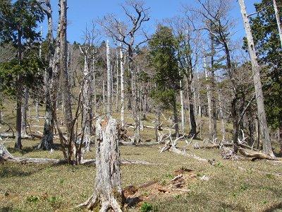 ここから登っていく。樹林はやはり大峰や大台ヶ原ぽい
