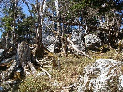 三津河落山の山頂付近は大きい岩があったりガレ場になっていた