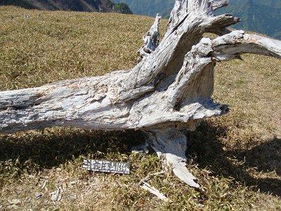 三津河落山(1628m)に到着。ここでは1654mになっているが三津河落山のこと