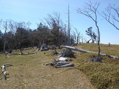 大台ケ原同様に倒れ木など多い