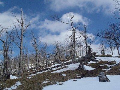 青空と倒れ木