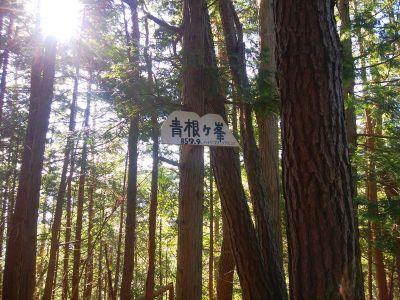 青根ヶ峰(857.9m)のプレート