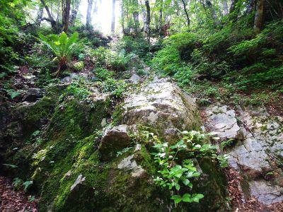 急登の途中で岩場を登る。トラロープまである。下山はかなり苦労しそうだ