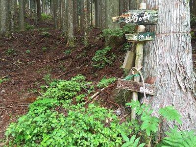 古い標識があった。ちゃんと登山道になっているんやね