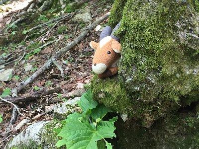 途中、嫁の持つヤックルが隠れやすい木を発見。こうやってみるとうちの猫みたいだ