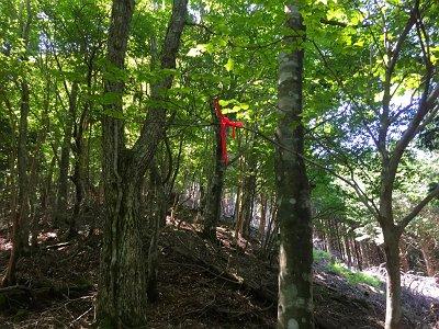 ところどころ木に赤い紐が結んであった