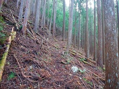 最初は植林地帯のつづら折れの道をじゃんじゃん登っていく。ここはそんなにしんどくなかった