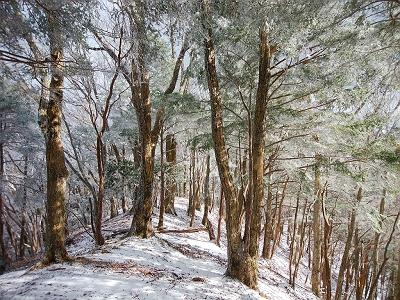 ちょうどこの付近からがらりと霧氷がではじめて自然林も増えてきた