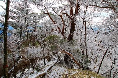 下山時の尾根の霧氷も素晴らしいので撮影。このあと、陽が登って気温があがっていったせいか、霧氷がなくなったのを下から見たので本当によかった