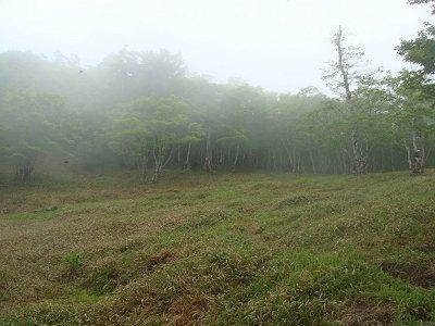 もう一つの草原地帯